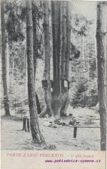 Partie z lesů Píseckých