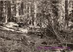 Šumava-Boubínský prales