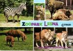 Zlín-Zoo- Zebra Bohmova