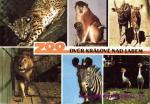 Zoo- Dvůr Králové nad Labem