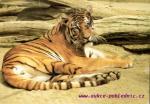ZOO-Stuttgart Tygr sibiřský