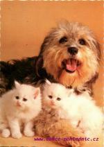 Pes a Kočky
