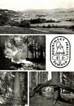 Boubínský prales - Šumava