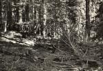 Šumava - Boubínský prales