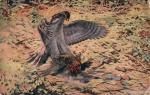 Myslivecký - dravý pták