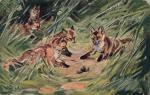 Myslivecký - lišky