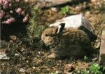 Zajíček, Veselé Velikonoce