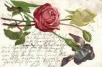 Blahopřání, růže